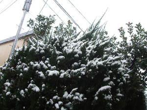 080123_snow.JPG