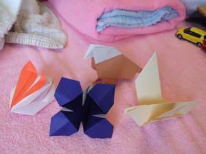 080629_origami1.JPG